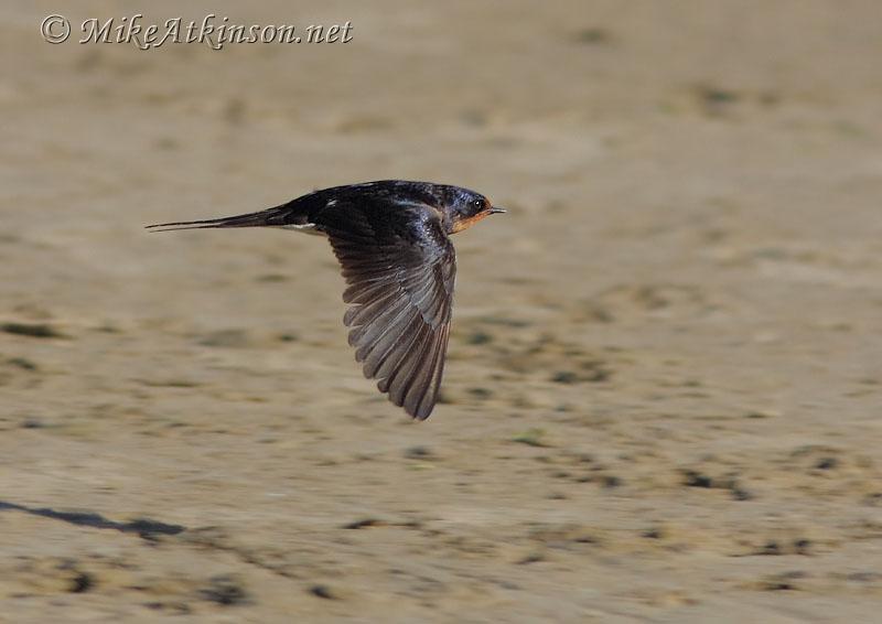 silhouettes of birds of prey in flight